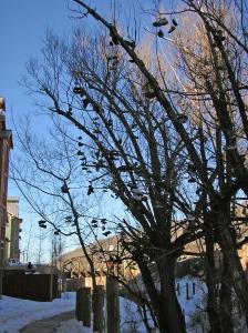 Shoe Trees at Park City, UT