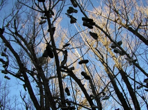 Park City Shoe Tree