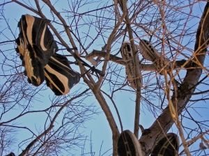 You can almost smell them. Park City Shoe Tree, photo by me, 2008.